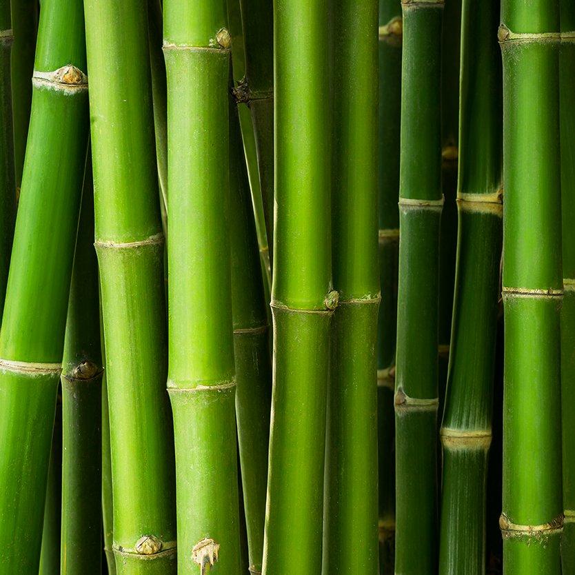 Le bambou, riche en silice pour les os et articulations