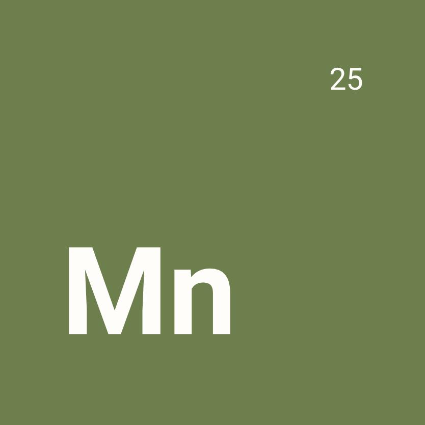 Le manganèse, un oligoélément indispensable à l'homme