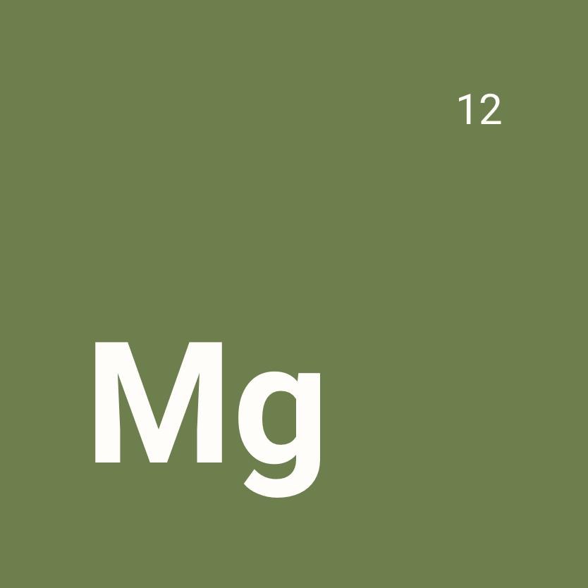Le magnesium, un nutriment qui aide au fonctionnement du système musculaire