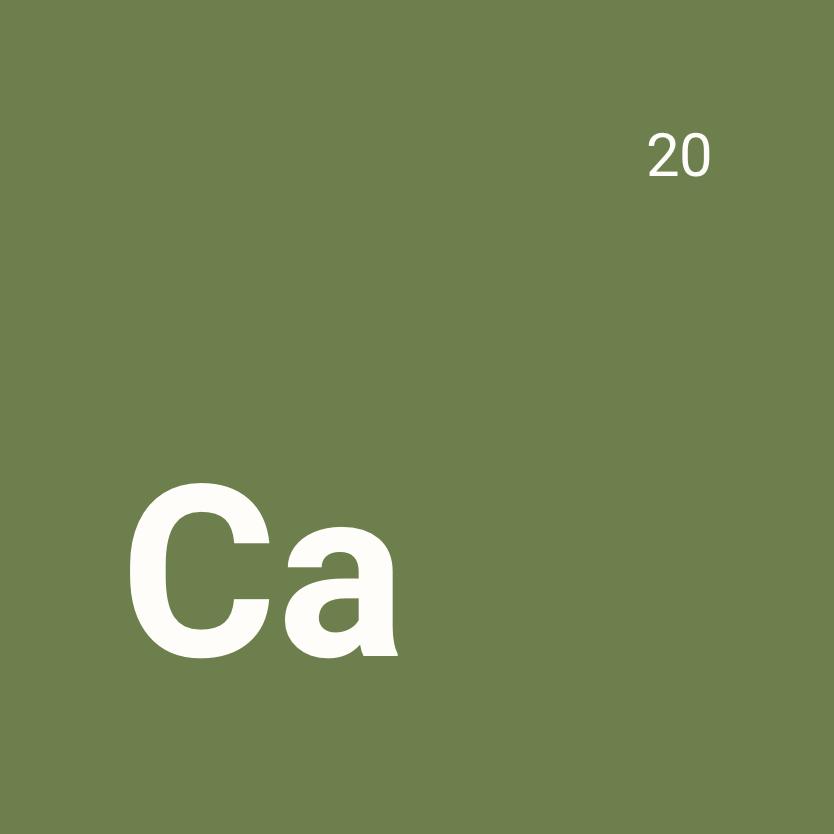 Le calcium, le nutriment qui préserve votre capital osseux